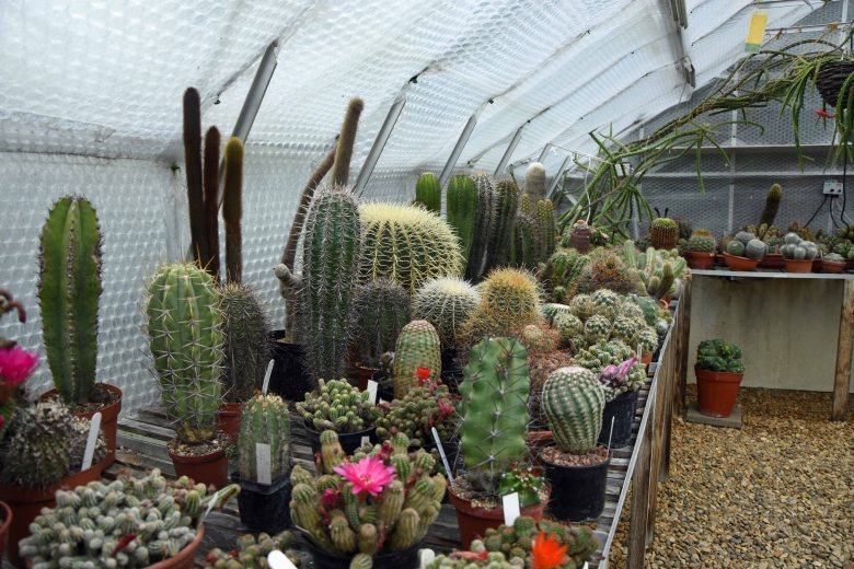Cacti collection at Tulsa House